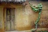 绿色孟加拉